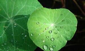 Bioniczny liść zamieni CO2 w paliwo