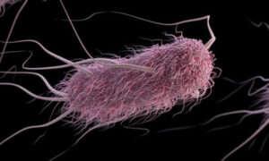 Kolonia bakterii jako nośnik danych