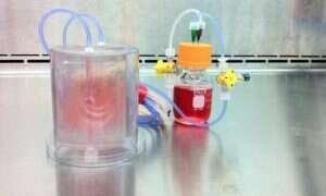 Kość, która wzrosła w laboratorium, idealnie zastąpi Twoją