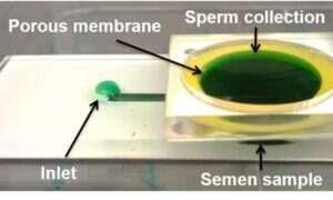 Nowa technika wspierania In-vitro