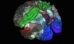 Najdokładniejsza mapa mózgu, jaka kiedykolwiek powstała