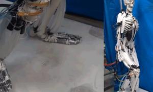 Robot wykorzystujący mięśnie do poruszania się