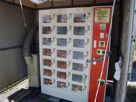 Automat z jajkami