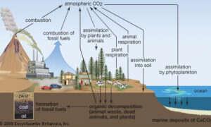 Eliminacją CO2 i produkcja paliwa w jednym