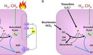 Bakteria zamienia CO2 na paliwo