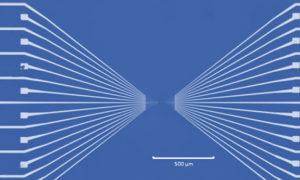 Początek ery zielonej elektroniki możliwy dzięki modyfikowanym genetycznie bakteriom