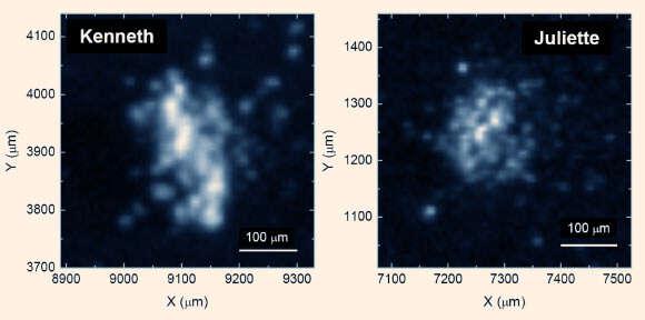 image_4173-rosetta-organic-matter