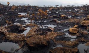Dzikie obszary przyrody są niszczone w zastraszającym tempie