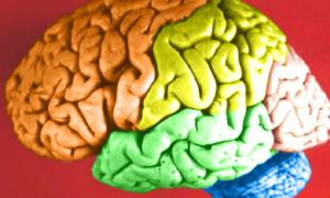 Gry dla mózgu to strata czasu
