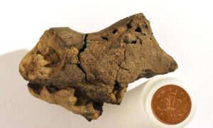 Odkryto tkanke mózgowa dinozaura