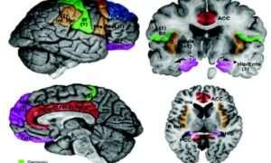 Nowe, znacznie szybsze fMRI