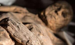 DNA ospy znalezione w mumii z XVII wieku