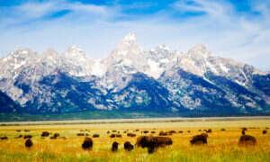 Wyoming uderza karami w energię odnawialną
