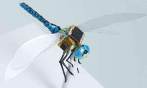 Ważka-dron może już niedługo latać wokół nas