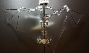 Bat Bot – dron naśladujący nietoperza