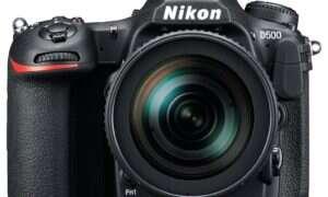 Nikon ujarzmi dzikie zwierzęta
