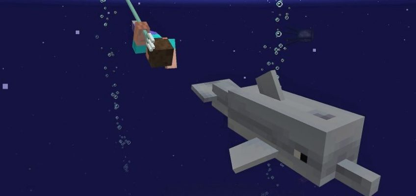 The Update Aquatic