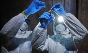 Odkryto nowy szczep wirusa Eboli