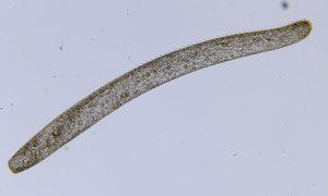 Odkryto najszybszy organizm na Ziemi – jest niezwykle mały!