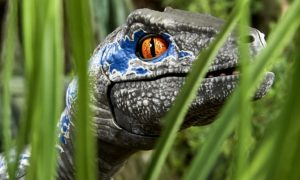 Przygarnij swojego robotycznego dinozaura Alpha Training Blue
