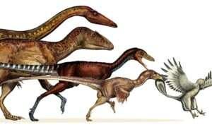 Współczesne dinozaury są bliżej niż mogłoby się Wam wydawać