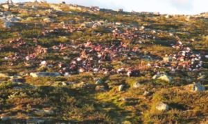 To zdjęcie martwych reniferów pokazuje, czym jest krąg życia