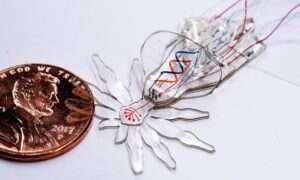Skakun inspiracją dla projektu robo-pająka o wielkości 1 milimetra