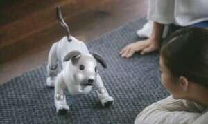 Robotyczny pies Aibo od Sony zmierza na rynek USA