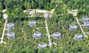 Nowe badania przesądzą o losach borealnych lasów iglastych