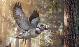 Oto skamielina ptaka pochodząca sprzed 127mln lat