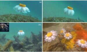 Roboty meduzy patrolują rafy koralowe