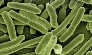 W jaki sposób bakterie chronią się przed antybiotykami?
