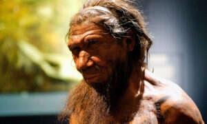 Czemu neandertalczycy wyginęli?