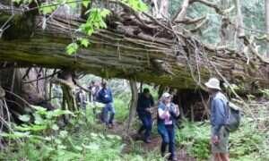 Na terenie kanadyjskiego lasu deszczowego odnaleziono setki nowych gatunków roślin