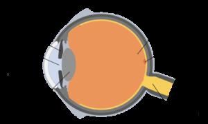 Ludzkie oko jest w stanie zaobserwować obrazy-widmo