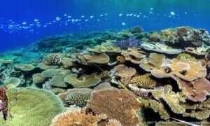 LarvalBot rozwiązaniem problemów związanych z wymieraniem rafy koralowej?