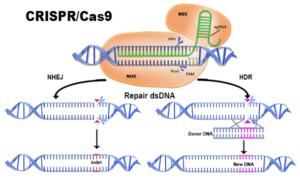Prenatalna edycja genów sposobem leczenia wrodzonych chorób