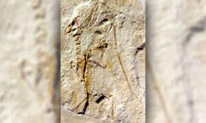 Jak wyglądało życie pterozaurów?