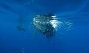 Zbadano skamielinę bezzębnego wieloryba