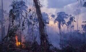 Pożary lasów Amazonii uwalniają ogromne ilości CO2