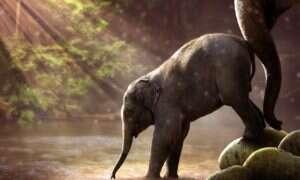 Na Ziemi trwa masowe wymieranie zwierząt