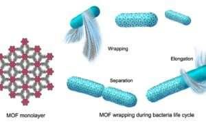 Kosmiczne skafandry dla bakterii