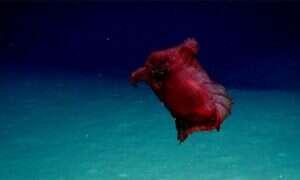 """Zobaczcie """"bezgłowego kurczakowego potwora"""" na dnie Oceanu Południowego"""