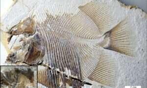 Ta pirania zamieszkiwała morza i oceany ponad 150 milionów lat temu