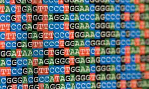 Naukowcy zamierzają przeprowadzić sekwencjonowanie złożonych gatunków