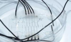 Platforma Nerve-on-a-Chip może być przyszłością neuroprotetyki