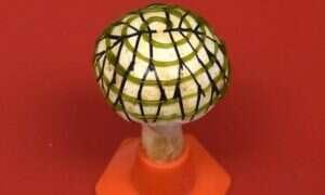 Bioniczny grzyb wykorzystuje bakterie i grafen do wytwarzania elektryczności