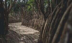 Niezwykłe centrum sztuki powstało w meksykańskiej dżungli