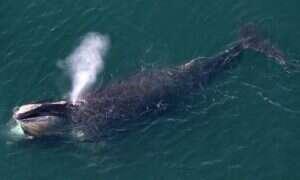 US Navy ogranicza hałas w celu ochrony wielorybów
