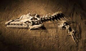 W Smithsonian obejrzycie szczątki potężnych potworów morskich